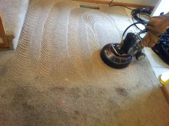 Carpet Cleaning Blampied
