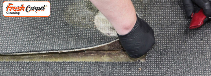 Carpet Repair Services Forest Hill