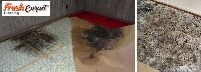 Carpet Mould Damage Removal Dharruk