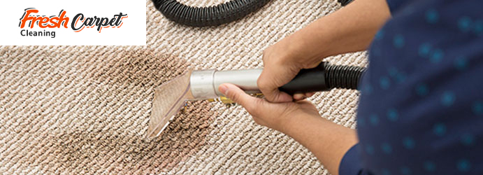 Carpet Mould Removal Perth
