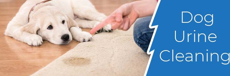 What is The Best Way to Clean Dog Pee Off The Carpet
